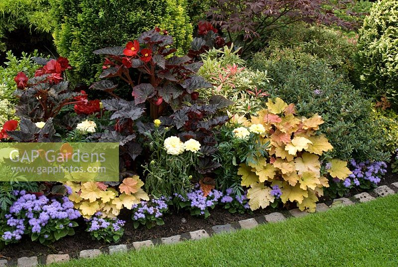 gap gardens late summer bed with begonia ageratum 39 blue. Black Bedroom Furniture Sets. Home Design Ideas