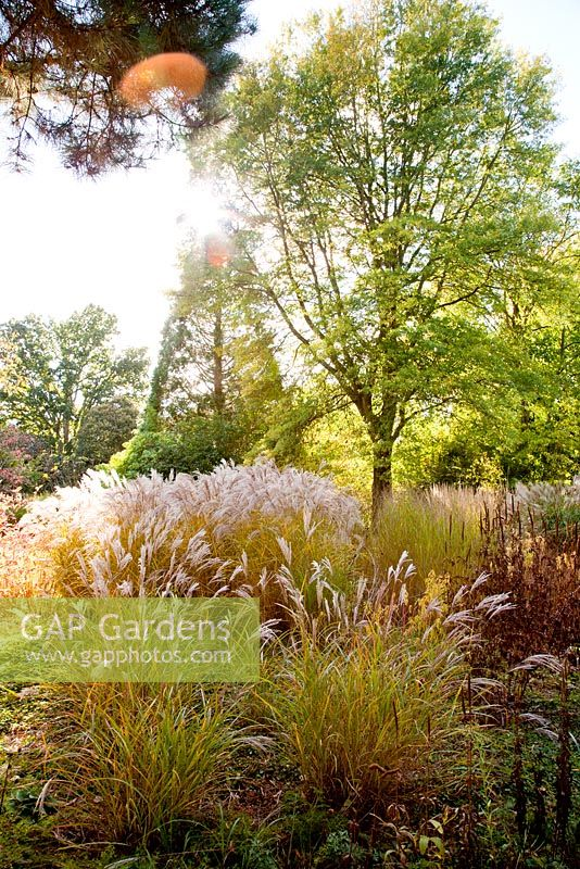 Mixed autumn planting in Decennium border with perennials and grasses - Knoll Gardens, Dorset