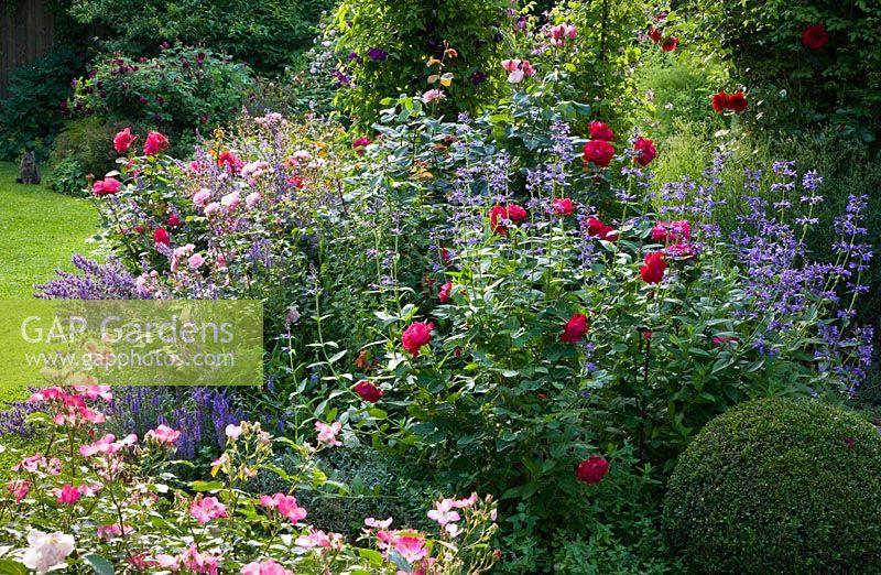gap gardens rosa 39 bonica 82 39 rosa 39 fleurette 39 clipped. Black Bedroom Furniture Sets. Home Design Ideas
