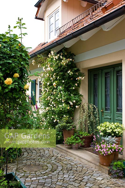 House Entrance With Plants In Terracotta Pots And Climbing Roses   Rosa  U0027Ghislaine De F