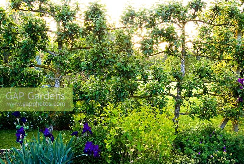 Formal kitchen garden is defined by espaliered apple trees - Ivy Croft, Leominster, Herefordshire, UK