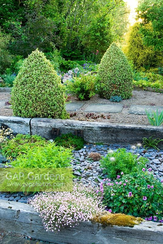Raised beds made with weathered railway sleepers mulched with blue slate chippings. A path behind is framed with two lines of Buxus sempervirens 'Elegantissima' clipped into cones, with pink flowered Gypsophila repens 'Dorothy Teacher' in foreground - Ivy Croft, Leominster, Herefordshire, UK