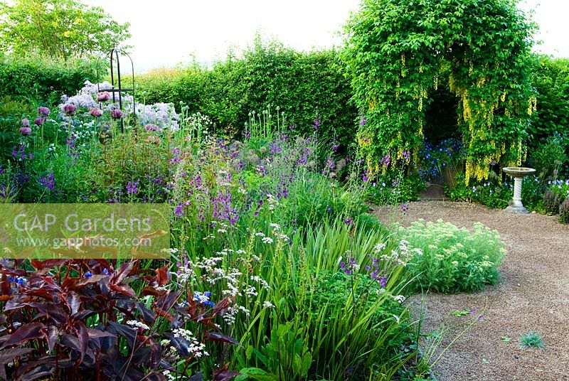 Arch trained with Laburnum waterei 'Vossii' in the front garden beyond border containing Persicaria macrocephala 'Red Dragon', Verbascum phoeniceum 'Violetta, Papaver orientale 'Patty's Plum', Anthriscus sylvestris 'Ravenswing' and Thalictrums - Ivy Croft, Leominster, Herefordshire, UK