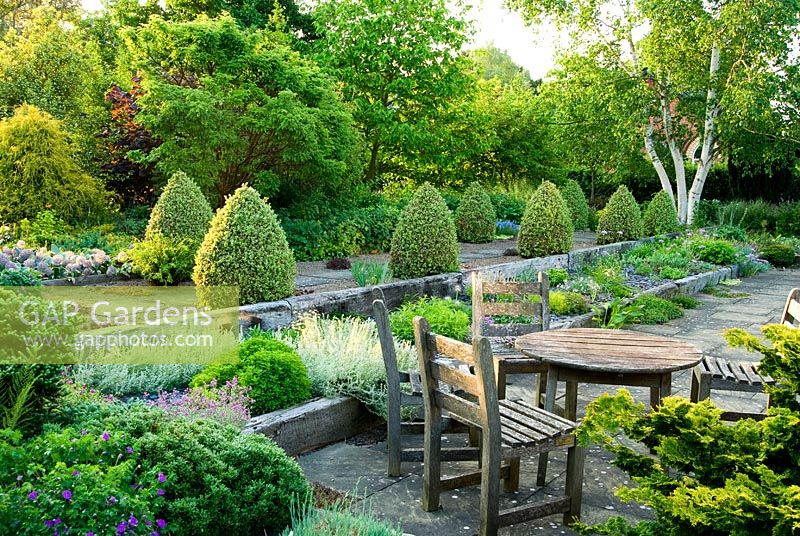 Seating area with raised beds made wit weathered railway sleepers. Two lines of Buxus sempervirens 'Elegantissima' clipped into cones frame a path of slabs set into gravel with Betula platyphylla beyond - Ivy Croft, Leominster, Herefordshire, UK