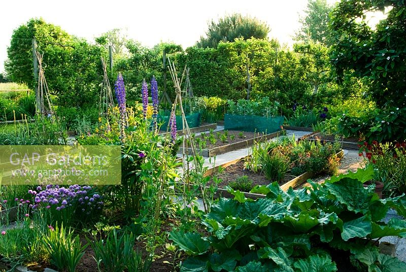 Formal kitchen garden is defined by espaliered apple trees and contains raised beds for vegetable and fruit growing - Ivy Croft, Leominster, Herefordshire, UK