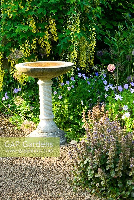 Bird bath beside arch trained with Laburnum waterei 'Vossii' in the front garden. Ivy Croft, Leominster, Herefordshire, UKIvy Croft, Leominster, Herefordshire, UK