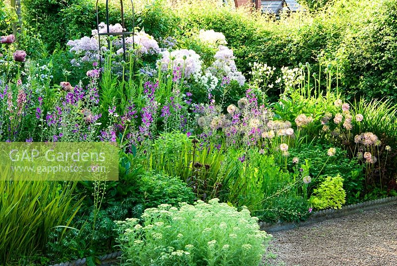 Border of purples and whites includes Papaver orientale 'Patty's Plum', Verbascum phoeniceum 'Violetta', Thalictrum aquilegiifolium and Allium rosenbachianum 'Shing'. Ivy Croft, Leominster, Herefordshire, UK