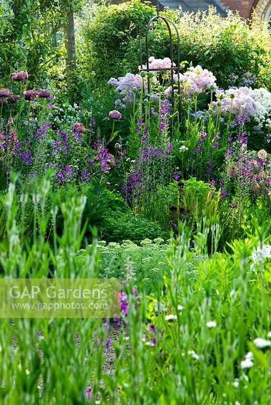 Border of purples and whites includes Papaver orientale 'Patty's Plum', Verbascum phoeniceum 'Violetta', Thalictrum aquilegiifolium and Allium rosenbachianum 'Shing' - Ivy Croft, Leominster, Herefordshire, UK