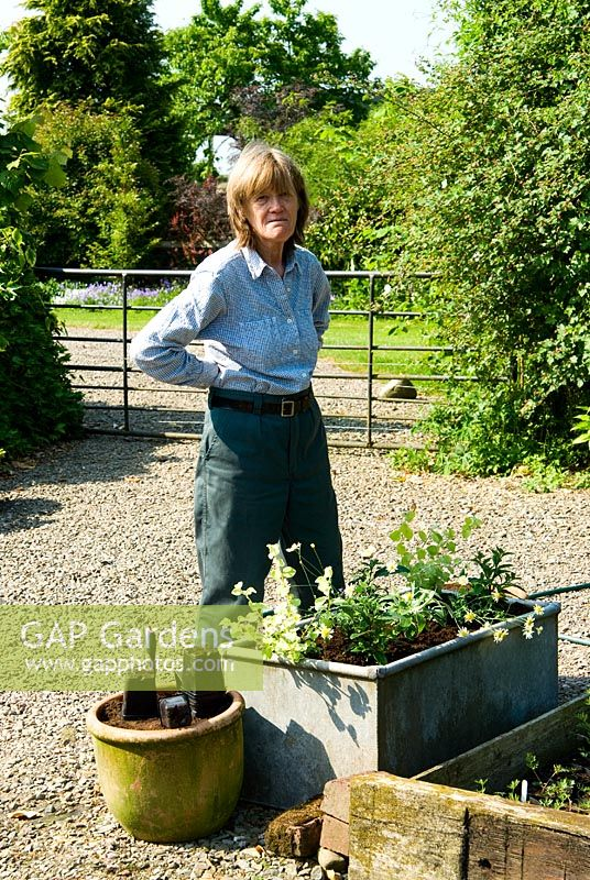 Sue Norman planting up a water trough with summer bedding -  Ivy Croft, Leominster, Herefordshire, UK