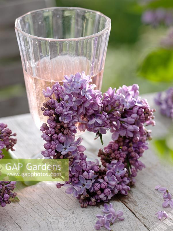Small heart of Syringa - Lilac leaning against glass