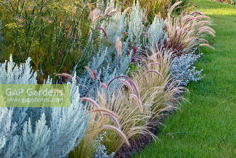 Gap gardens ornamental grass border with artemisia for Tall grass border