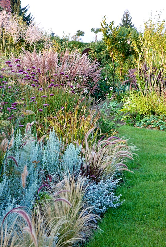 Gap gardens ornamental grass border where grasses in for Tall grass border