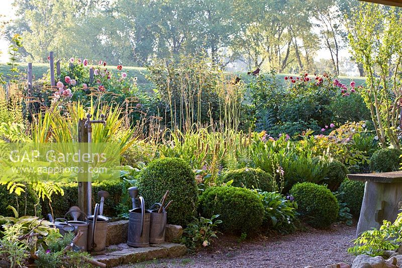 Tin watering cans at a paved watering station in front of the borders that are edged by a low clipped box hedge with two spheres. Border contains Buxus, Crocosmia, Dahlia and Hibiscus syriacus