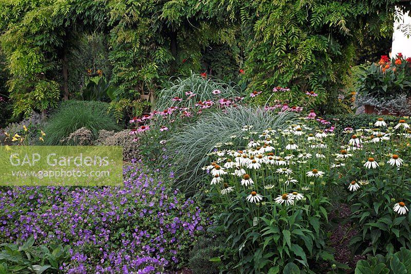 gap gardens echinacea purpurea 39 alba 39 miscanthus. Black Bedroom Furniture Sets. Home Design Ideas