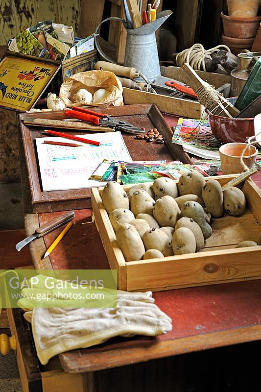 Gardeners desk in a large potting shed with seeds, seed potatoes, and gardening items, Norfolk, UK, March