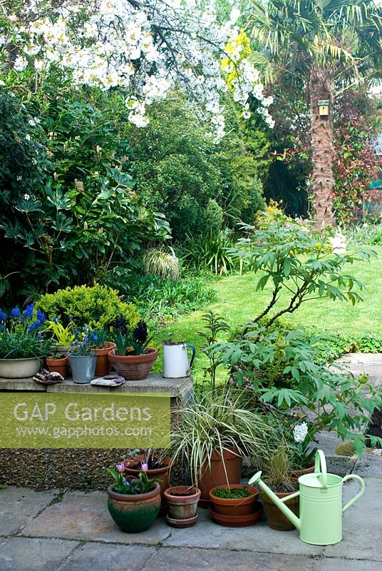 Garden view with Spring with containers
