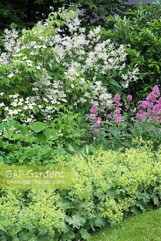 gap gardens aconogonum speciosum 39 johanniswolke 39 cornus. Black Bedroom Furniture Sets. Home Design Ideas