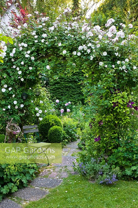 Romantic garden with Rose arch over a circular patio and wooden chair. Planting includes Rosa 'Venusta Pendula', Alchemilla mollis, Buxus and Clematis 'Warzawska Nike'