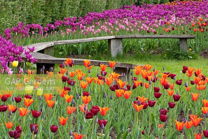 gap gardens tulip festival at rhs harlow carr yorkshire