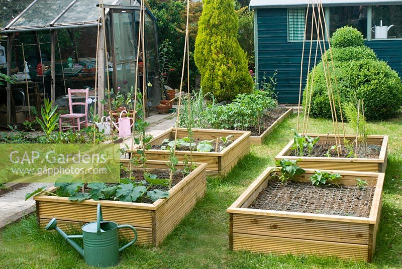 Garden view with veg beds and watering can