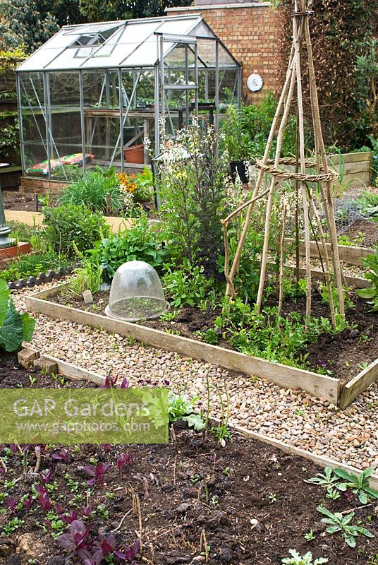 Vegetable garden in Spring with wooden planks edging beds, wigwam plant support, gravel paths and greenhouse in at Bliss Lane, Flore, Northamptonshire. The garden is open for The National Garden Scheme