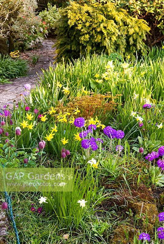 Small pond near the house surrounded by spring flowers including drumstick primulas, Primula denticulata, Scilla sibirica, Fritillaria meleagris and narcissi with mix of deciduous and evergreen shrubs clothing the slope beyond. Chiffchaffs, nr Bourton, Dorset, UK