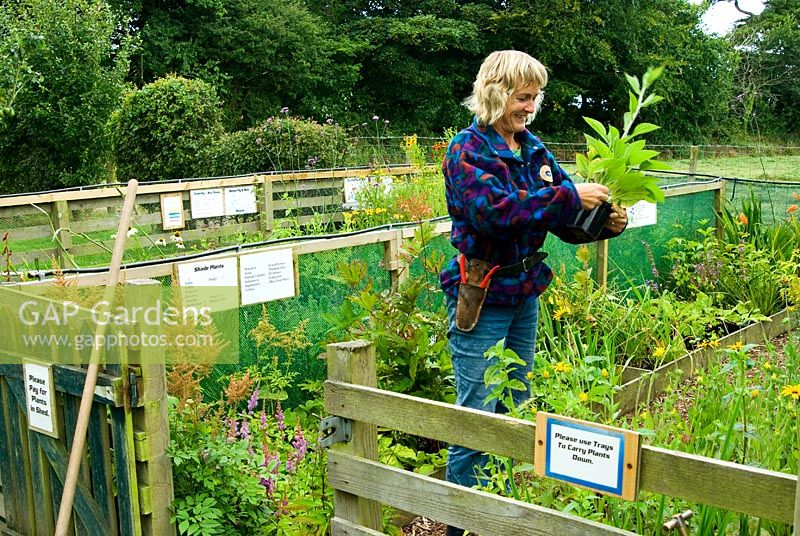 Gap gardens tina primmer working in her plant sales area for Gardening jobs cornwall