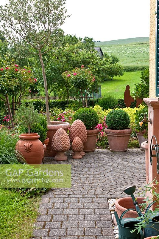 Terracotta pots and cones in a paved area of the courtyard, planted with Rosa 'Heidetraum' Buxus, Hedera helix 'Hibernica', Olea europaea and Rosmarinus officinalis