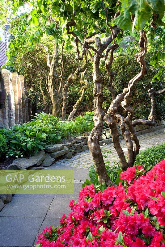 Gap gardens asian themed garden image no 0257820 for Japanese themed garden