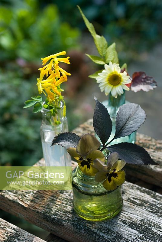 Picked flowers in antique glass bottles. Corydalis lutea, Viola 'Irish Molly' and yellow Agyranthemum