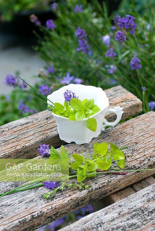 Picked herbs and lavender in old white china cup