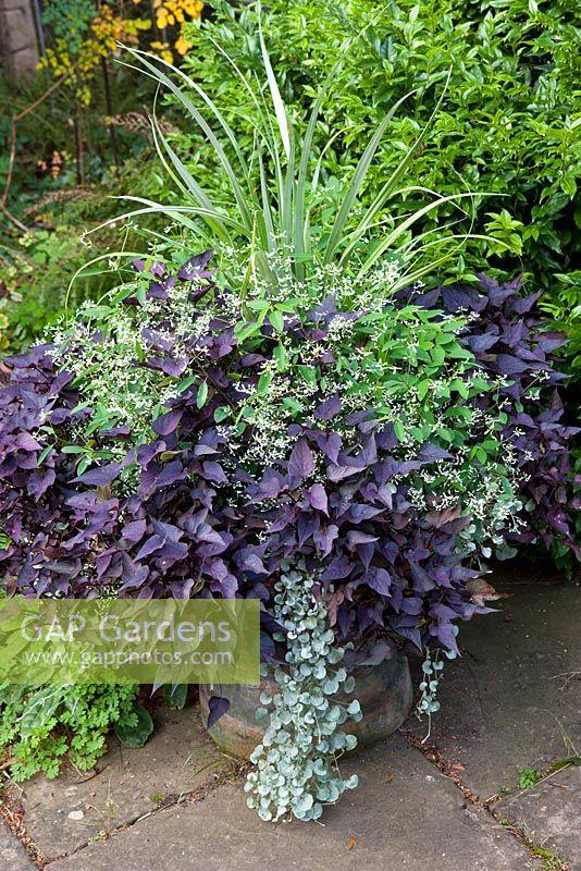 gap gardens container with astelia chathamica euphorbia 39 diamond frost 39 ipomoea batatas. Black Bedroom Furniture Sets. Home Design Ideas