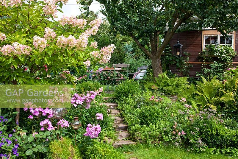 Steps lead to a relaxing area with wooden iron furniture. The planting includes, Buxus, Ferns, Hydrangea paniculata and Phlox paniculata
