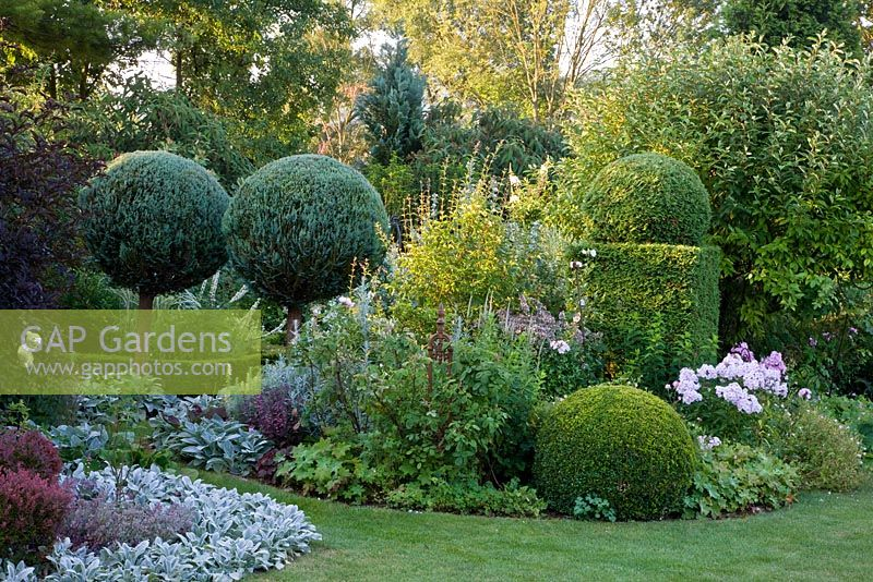 Mixed border with  Buxus - Box and Chamaecyparis topiary. Berberis thunbergii 'Atropurpurea Nana', Eleagnus, Nepeta grandiflora 'Dawn to Dusk', Phlox paniculata 'Monica Lynden-Bell', Sambucus nigra 'Black Beauty', Sedum 'Purple Emperor', Stachys byzantina 'Big Ear', S. byzantina 'Silver Carpet' and Thuja occidentalis 'Smaragd'