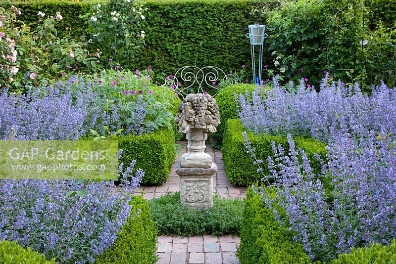 Formal garden with scented borders of Nepeta 'Walkers Low'  - Catmint. Buxus and Taxus hedges