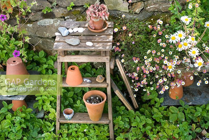 Terracotta pots on old wooden steps with alpine Strawberries, Geranium 'Anne Folkard' and Erigeron karvinskianus
