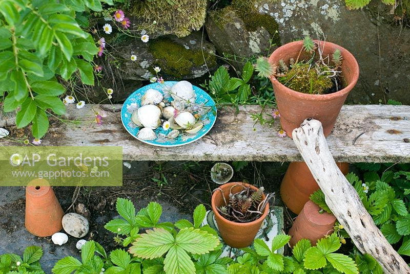 Old terracotta pots and sea shells on driftwood shelf