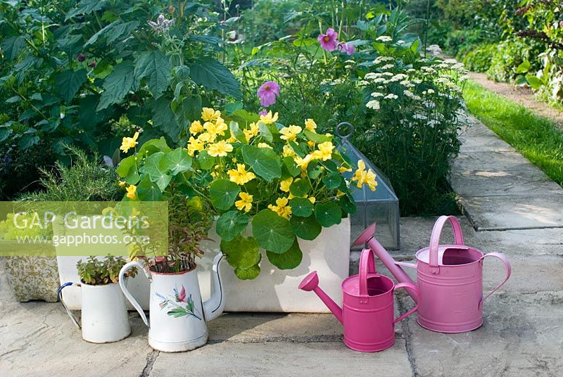 Patio with trough of Tropaeolum - Nasturtium 'Whirlybird Cream', Rosemary, Mint, Achillea millefolium - Yarrow, and pink watering cans
