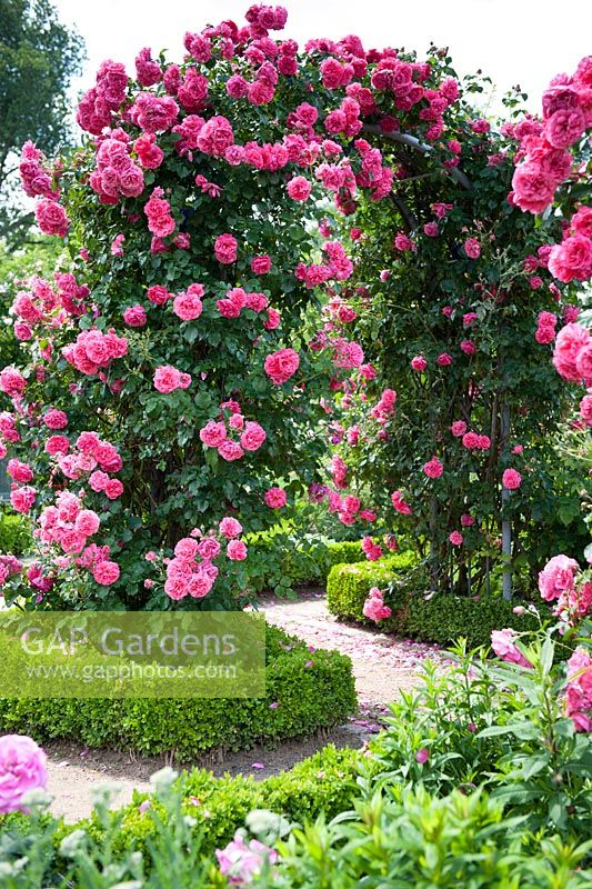 Arch with climbing Roses