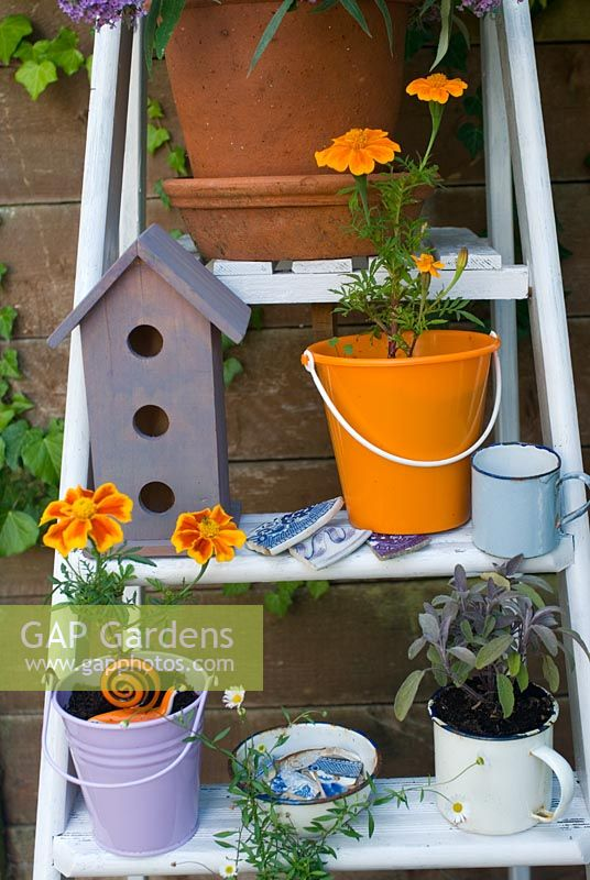 White step ladder with purple and orange pots of Purple Sage and Tagetes - Marigolds