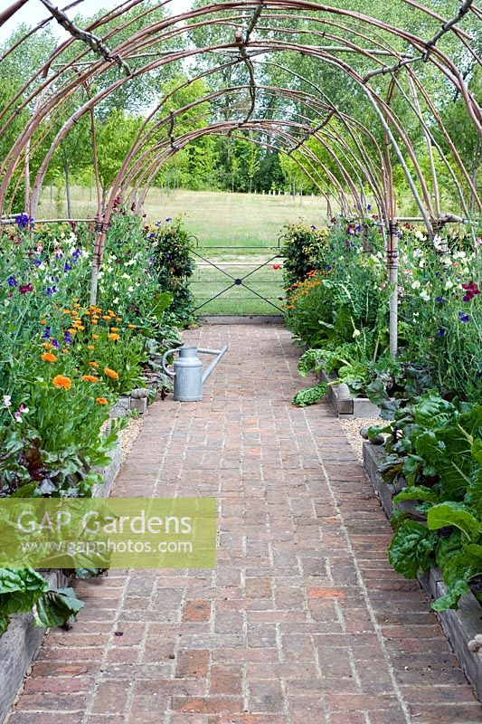 Hazel tunnel with Lathyrus odorata - Sweetpeas underplanted with vegetables and calendula