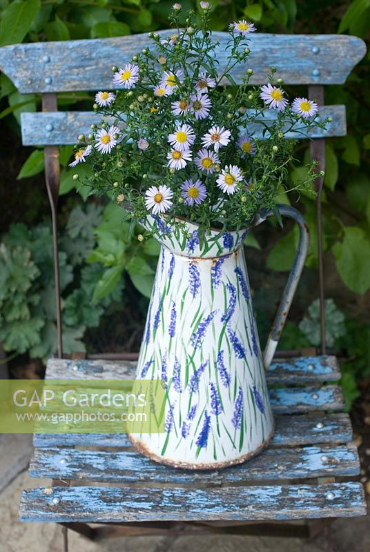 Michaelmas daisies in enamel jug on blue chair