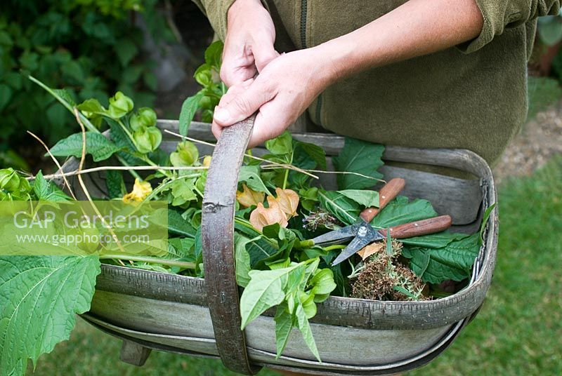 Carrying trug with prunings
