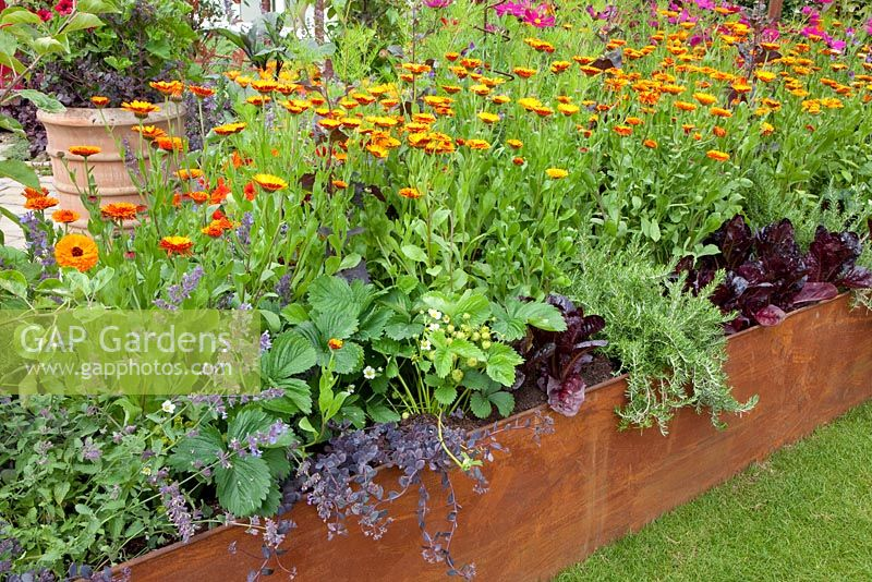 Raised bed with vegetables and companion planting