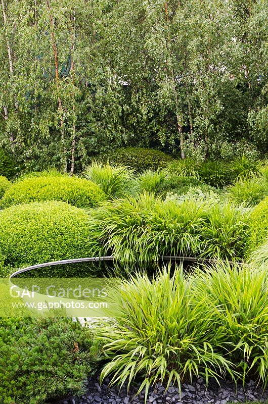 Gap gardens clipped ball shaped box hedges and for Modern ornamental grasses