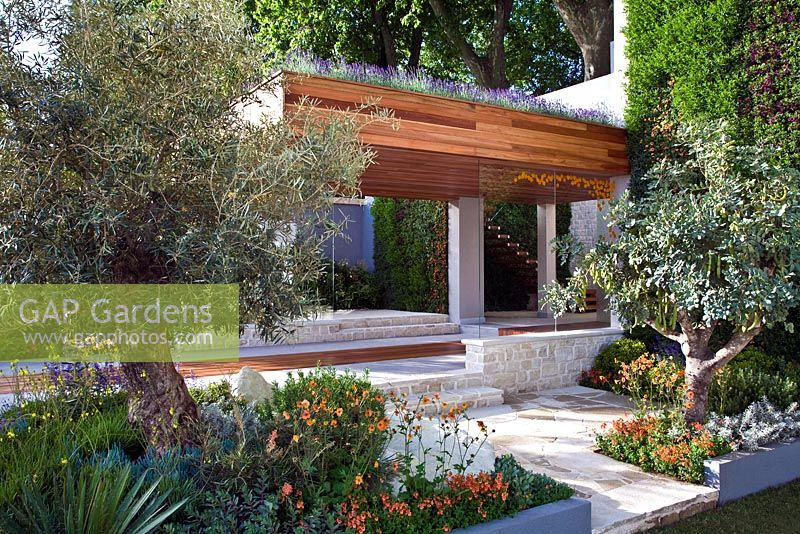 Gap gardens mediterranean style garden with olea olive trees and drought tolerant planting - Chelsea flower show gold medal winners ...