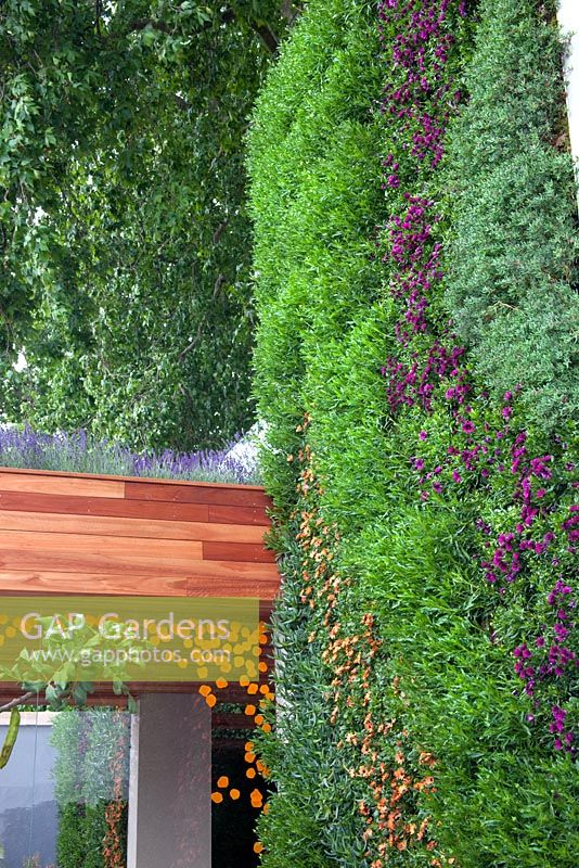 Gap gardens a 39 living wall 39 using lampranthus and lavender 39 a monaco garden 39 gold medal - Chelsea flower show gold medal winners ...