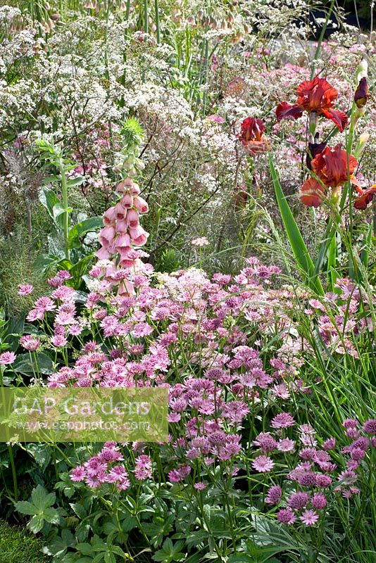 Astrantia 'Roma', Iris barbata 'Dutch Chocolate', Foeniculum vulgare 'Giant Bronze', Deschampsia cespitosa, Digitalis mertonensis and Anthriscus sylvestris 'Ravenswing' - The Laurent-Perrier Garden - Nature and Human Intervention - Gold Medal Winner, RHS Chelsea Flower Show 2011
