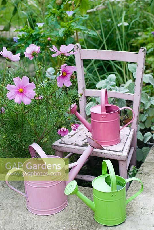 Pink cosmos with childs chair and watering cans
