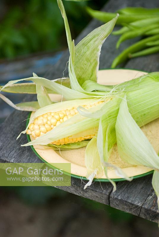 Picked sweetcorn 'lapwing' on plate